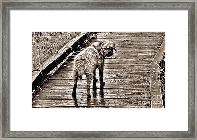 Pet Portrait - Puck Framed Print