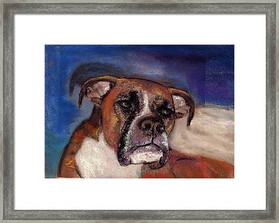 Pet Portraits Framed Print by Darla Joy  Johnson