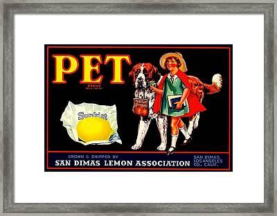 Framed Print featuring the painting Pet Saint Bernard 1920s California Sunkist Lemons by Peter Gumaer Ogden