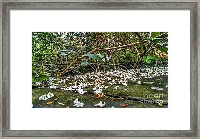 Petal And Stone Framed Print