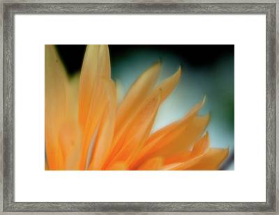 Framed Print featuring the photograph Petal Disaray by Greg Nyquist
