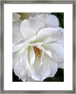 Petal Envy Framed Print