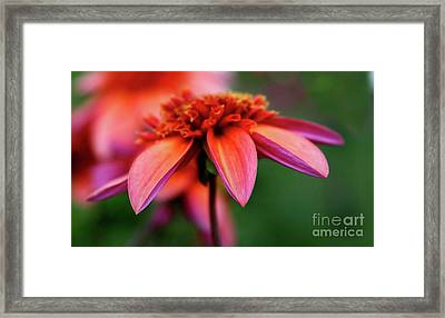 Petal Perfect Framed Print