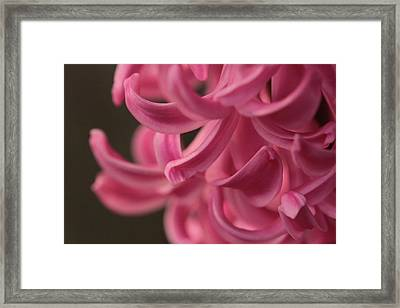 Framed Print featuring the photograph Petal Pointing  by Connie Handscomb