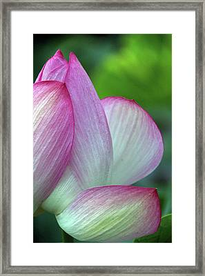 Petal Puzzle Framed Print by Carolyn Stagger Cokley