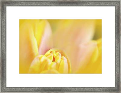Petal Sorbet Framed Print
