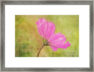 Petalia - 02t12 Framed Print by Variance Collections