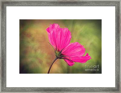 Petalia - 21a Framed Print by Variance Collections