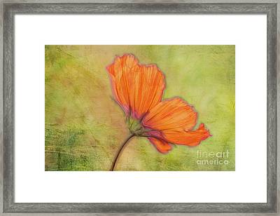 Petalia - 30c2b1 Framed Print by Variance Collections