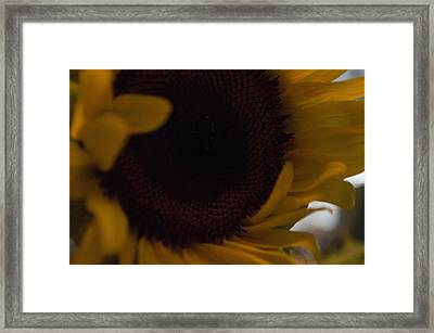 Petaling Along Framed Print by Tara Miller