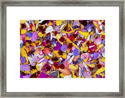 Petalmania Framed Print by Tim Gainey