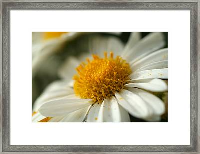 Petals And Pollen Framed Print