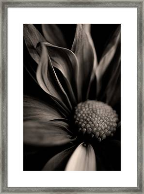 Petals Framed Print