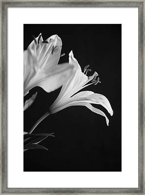 Framed Print featuring the photograph Petals' Light by Eric Christopher Jackson
