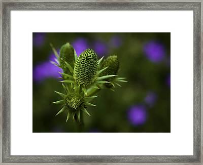 Petals Lost Framed Print