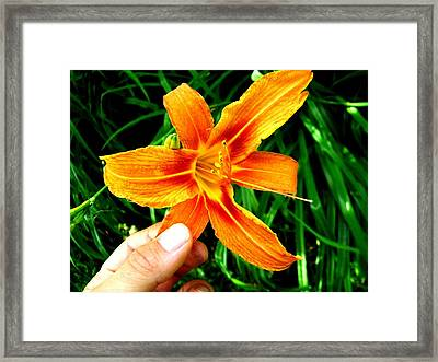 Petals Framed Print by Michael Grubb