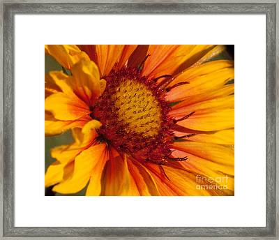 Petals Of Fire Framed Print