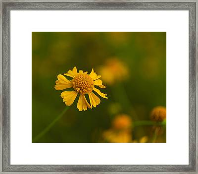 Petals Of Nature Framed Print