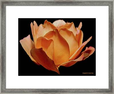 Petals Of Orange Sorbet Framed Print by DigiArt Diaries by Vicky B Fuller