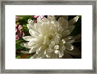 Petals Profusion Framed Print by Cricket Hackmann