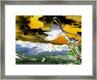 Petals To The Sky Framed Print by Peter  McIntosh