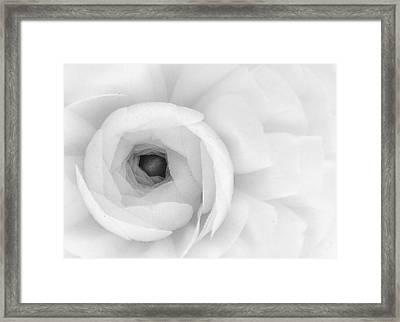 Petals Unfurling Framed Print