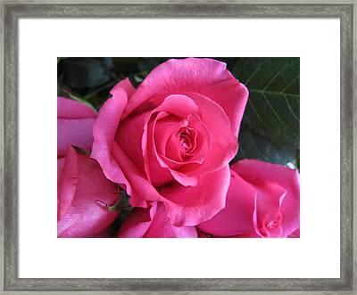 Petals Xxx Framed Print