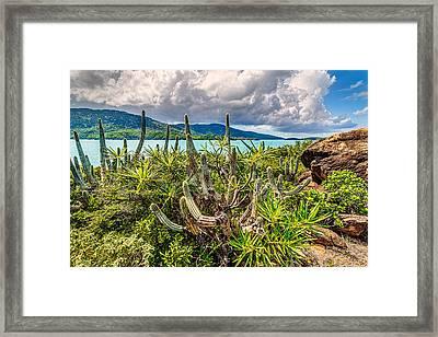 Peterborg Cactus Framed Print