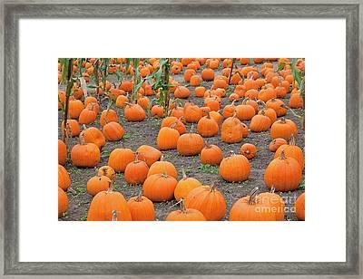 Petes Pumpkin Patch Framed Print