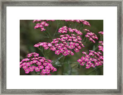 Petit Point Framed Print by Connie Handscomb