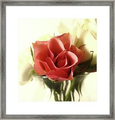 Petite Bouquet Framed Print