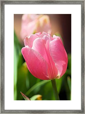 Petite Pink Framed Print by Katherine White