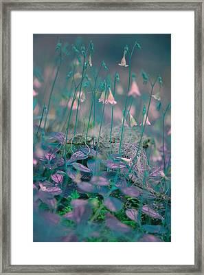 Petites Fleurs Framed Print