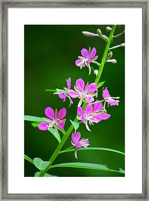 Petites Fleurs Violettes Framed Print