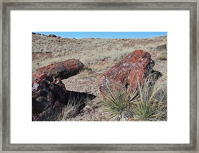 Petrified Afternoon Framed Print by Gary Kaylor