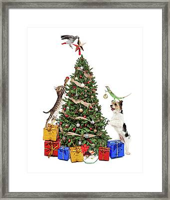 Pets Decorating Christmas Tree Framed Print by Susan Schmitz