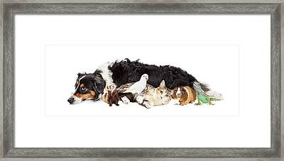 Pets Together On White Banner Framed Print