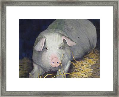 Petunia Framed Print by Ally Benbrook
