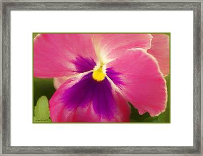 Petunia In Bloom Framed Print by Debra Lynch