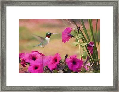 Petunia Lover Framed Print