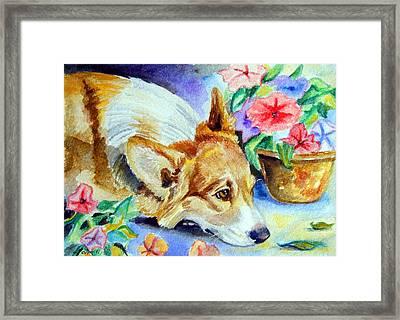 Petunias - Pembroke Welsh Corgi Framed Print