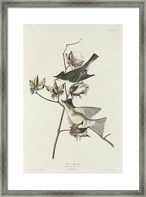 Pewit Flycatcher Framed Print