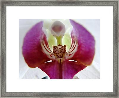 Phalaenopsis Orchid Detail Framed Print