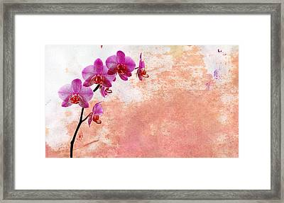 Phalaenopsis Orchid Pink Framed Print