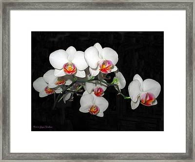 Phalaenopsis Orchids Framed Print by Joyce Dickens