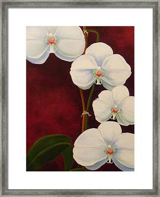 Phaleanopsis Framed Print by Anne Marie Brown