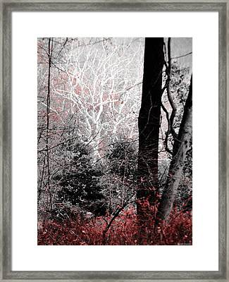 Phantasm In Wildwood Framed Print