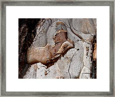 Pharaoh - Tree Bark Art Framed Print by Elena Schaelike
