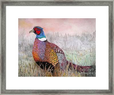 Pheasant Dawn Framed Print