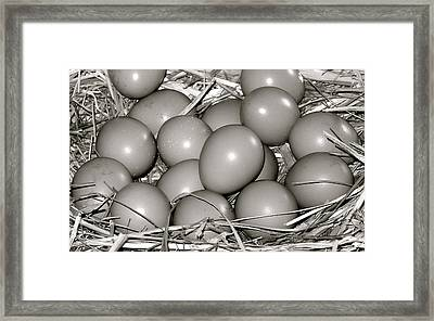 Pheasant Eggs Framed Print